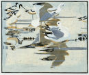 Common Gulls and Avocets £95 unframed