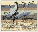 Cranes £95 unframed