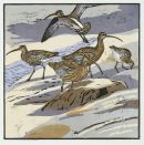 Curlews £95 unframed