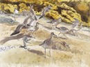 Whimbrel and Rabbits £450.00