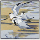Little Tern £95 EDITION SOLD OUT