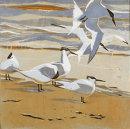 Tideline Terns