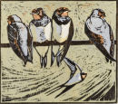 Young Swallows    £95 unframed