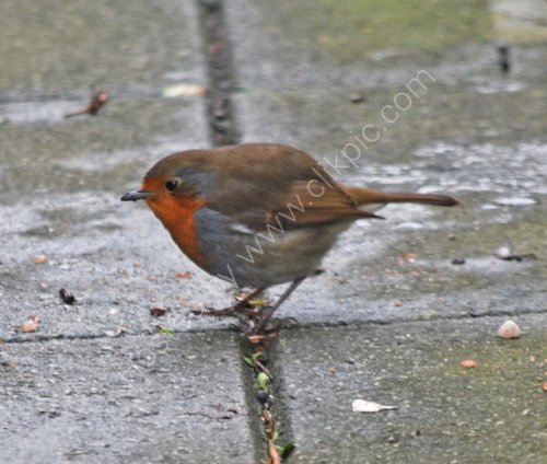 Robin on our path