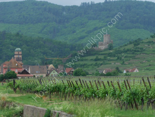 Vinyard in the Alsace