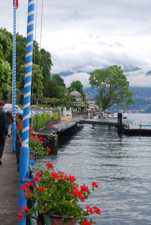 Geraniums - lakeside, Lake Como