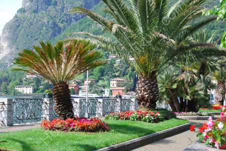 Palm trees at Menaggio