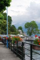 Geraniums at Lakeside