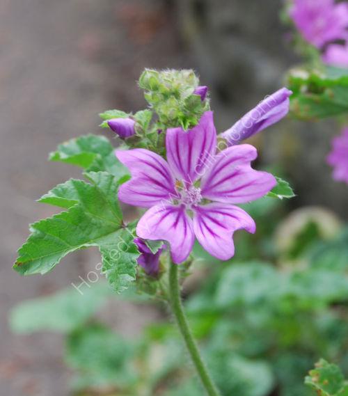 Roadside flower...
