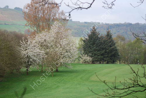 Blossom alongside the fairway