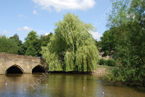 Willow by the bridge
