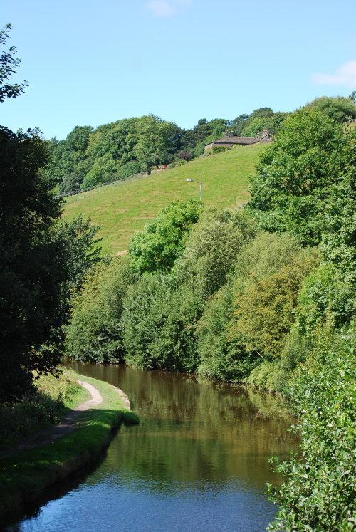Greenery around the canal