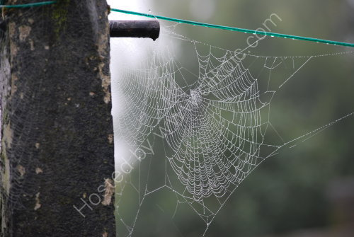 Spiders web [on a misty morning]