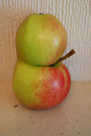 Conjoined Apples ......