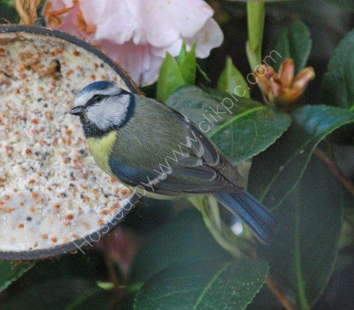 Feeding in our garden
