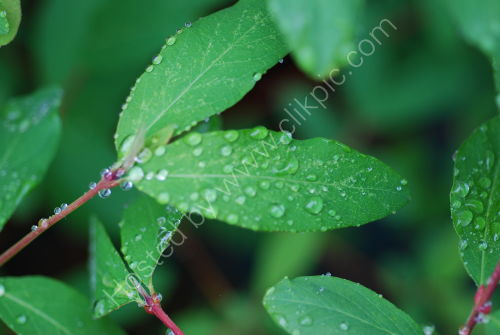 Water droplets on leaf !