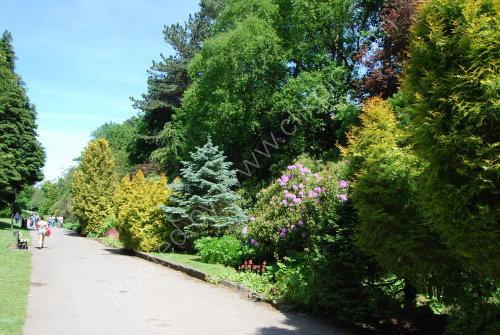 The Valley Gardens