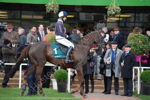 Denman - parade of former Race horses