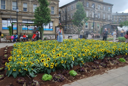 Sunflowers - The Mini French Farm, Huddersfield
