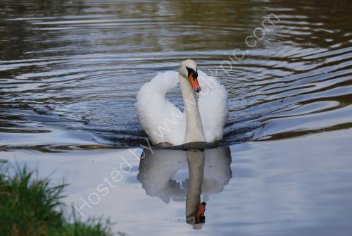 Elegance on the canal .......
