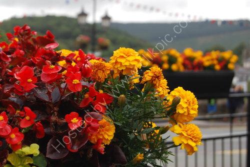 Flowers tubs on the bridge