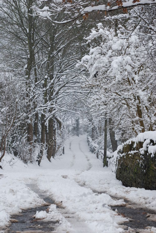 Sutcliffe Wood Road