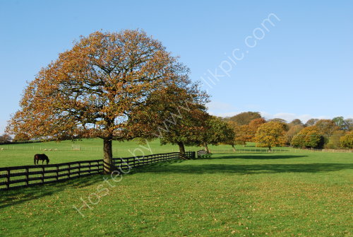 Autumn 2014 at Priestley Green