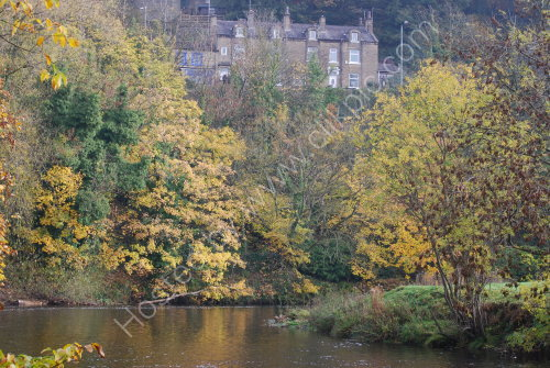 Autumnal colour beside the river