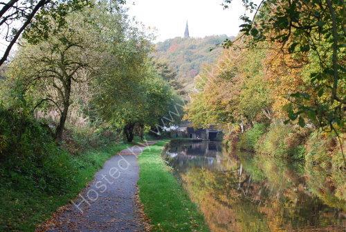 Autumn alongside the canal