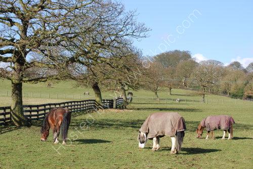 Quietly grazing.....