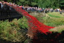 "The ""Wave"" - ceramic poppy display"