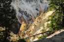 Afternoon light in the Grand Canyon of Yellowstone