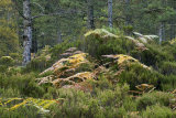 Ben Eighe Woodland