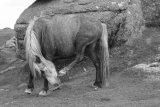 Dartmoor Grey