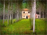 Farm in the Forest