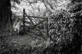 The Forgotten Gate