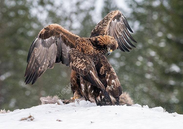 Eagles sparring