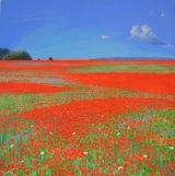 Yaverland Poppies
