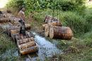 Loading Sago Logs