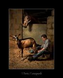 Milking Goat 2