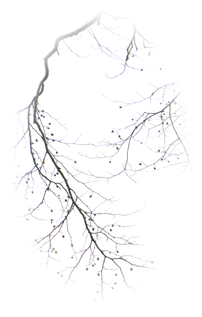 1031-twig one