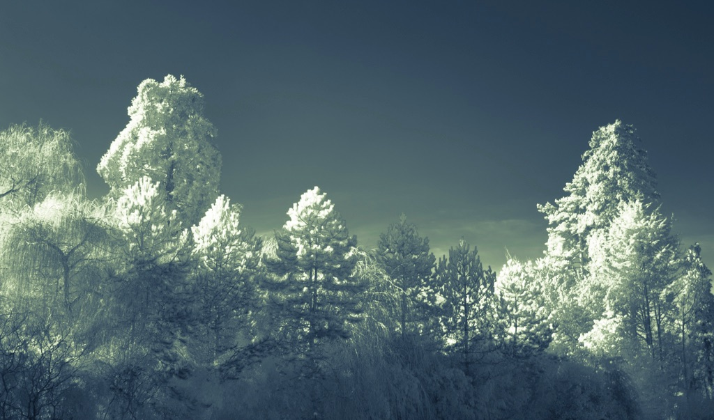 4013 - welsh woods IR