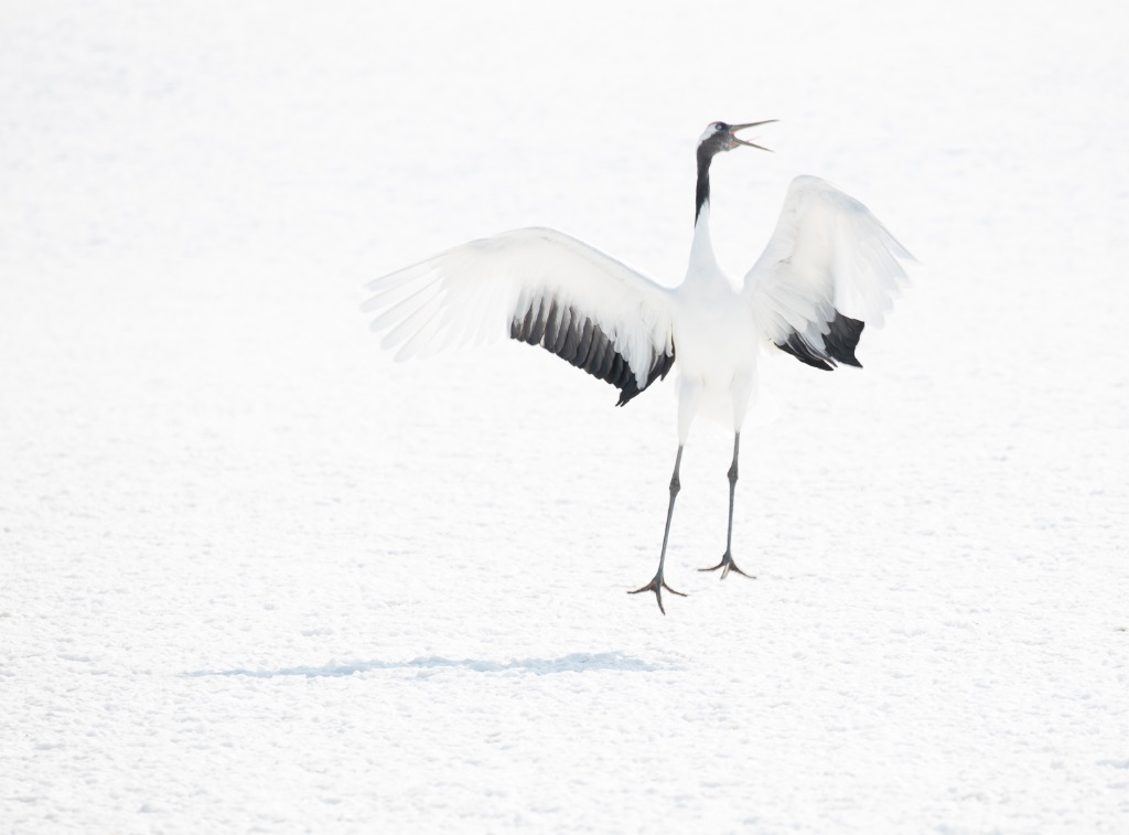Hokkaido 020