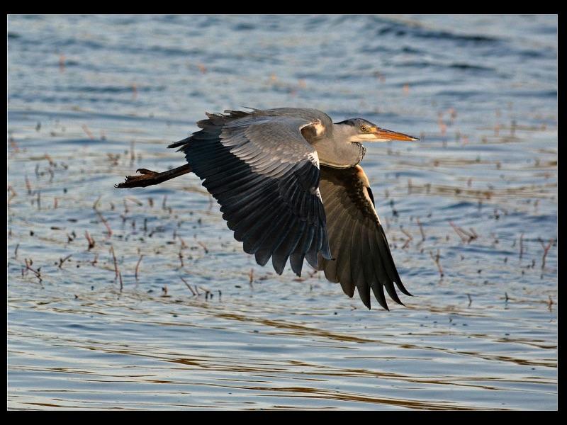 06 Com Heron by Ken Agutter