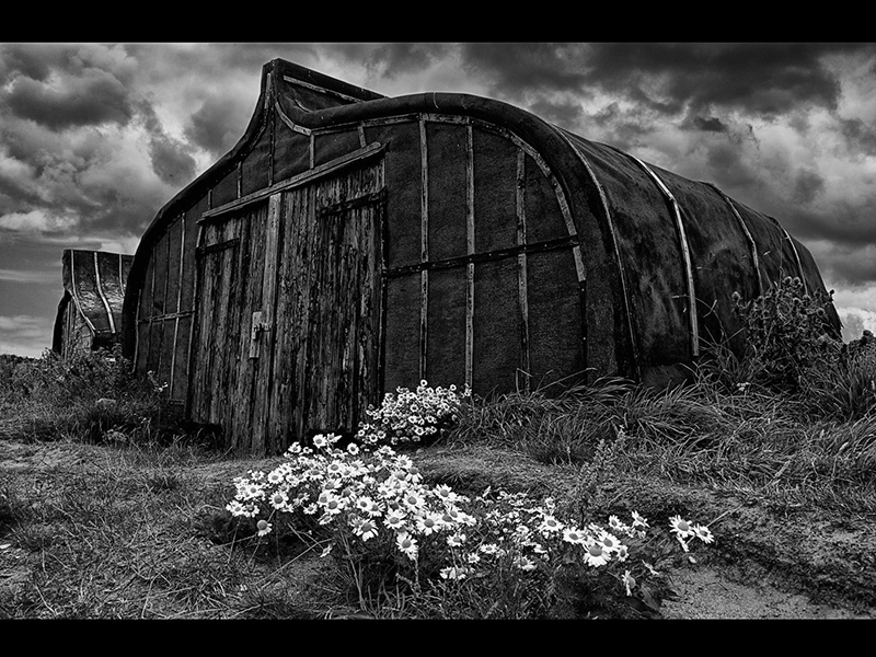 06 Com Huts and Camomile by Graham Martin