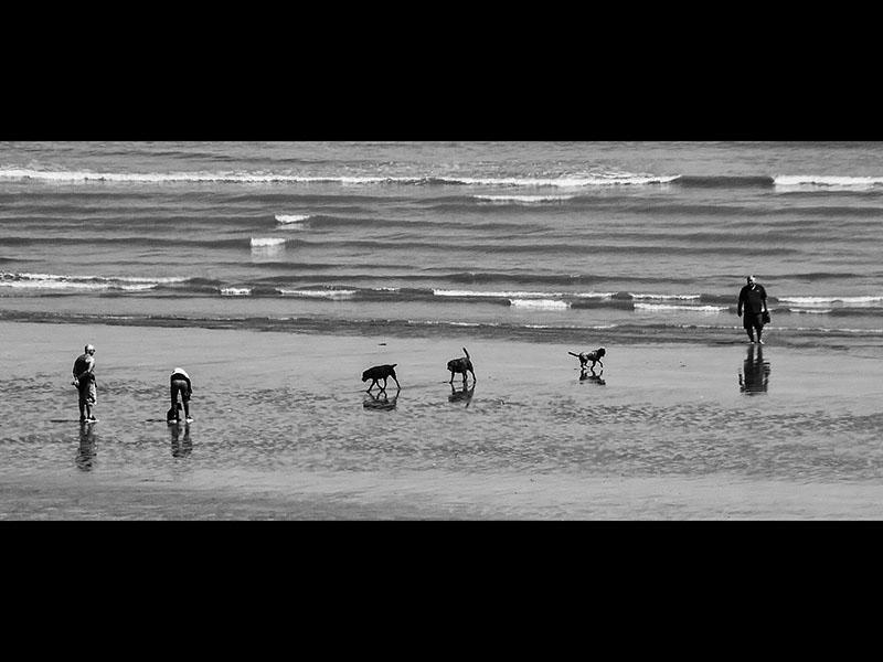 08 Dog days Com Sheila Rayson