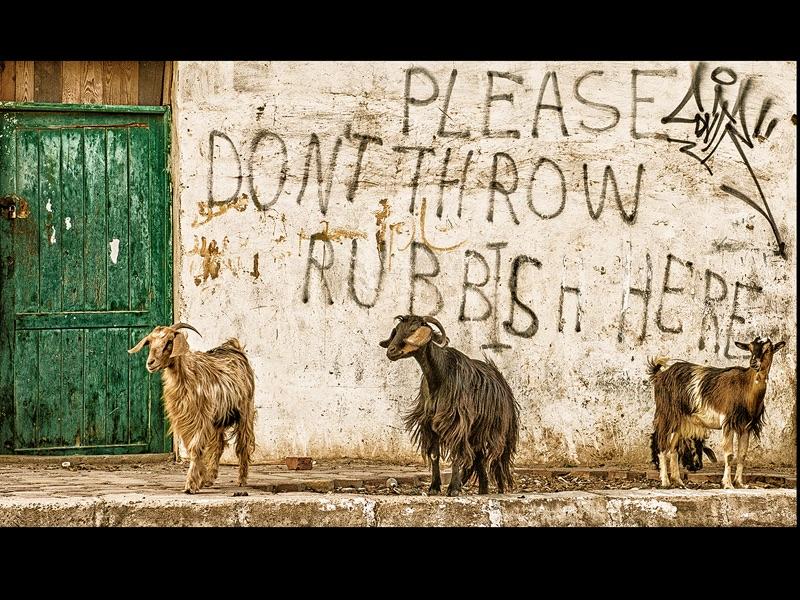 Street Life by David Keep