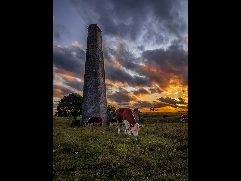 COM Cattle Grazing at Magpie Mine by Martin Duffey