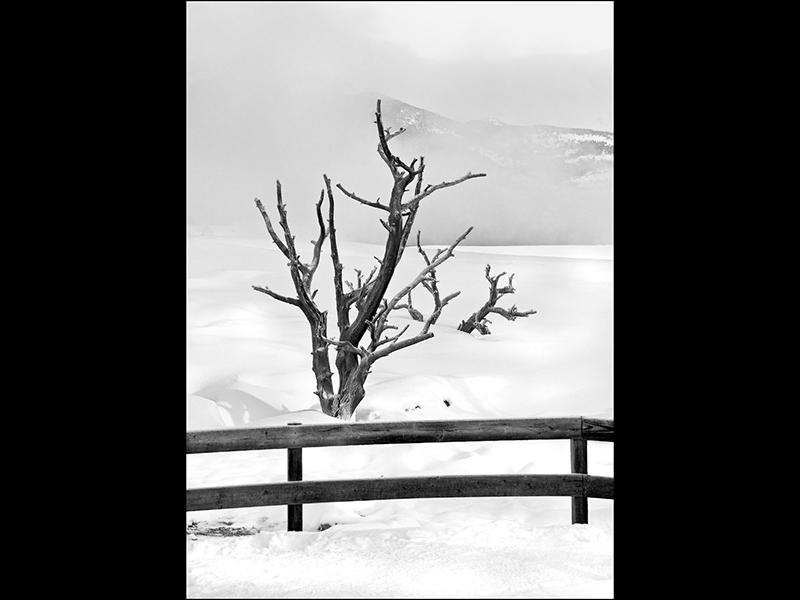 Com Dead Trees in Winter Mist by Sue Wilson