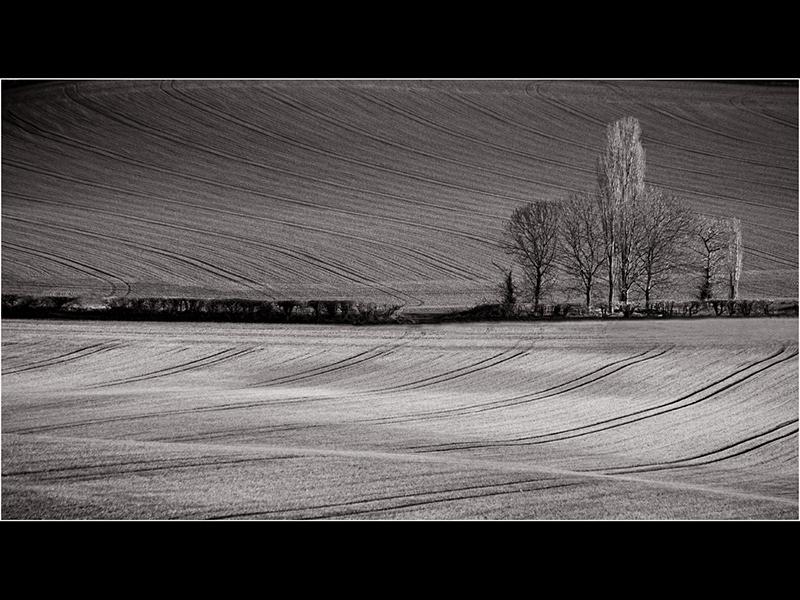 Com Lie of the Land by Robert Falconer